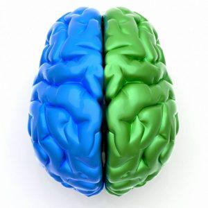 آزمون تشخیص برتری نیمکره های مغز